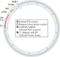 miScript miRNA PCR Array layout for Rotor-Disc format R.
